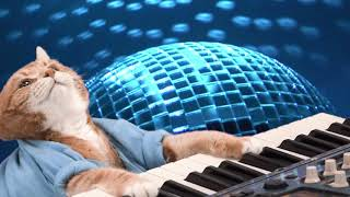 KEYBOARD CAT is Totally Cat