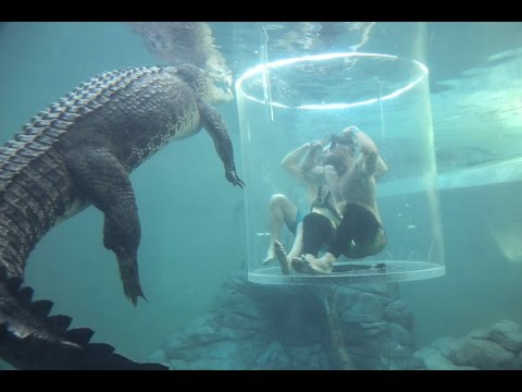 Shark Diving VS Croc Cage Of Death