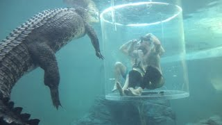 I Can't Believe This Is Happening | Cage Diving With Sharks & Crocodiles