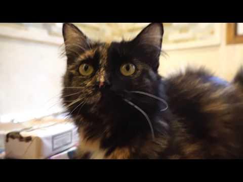 Kitten 4K Close Up!  2017-07-30