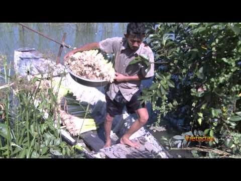 Vietoday TV - Một thoáng quê hương 53 - Xóm Gò