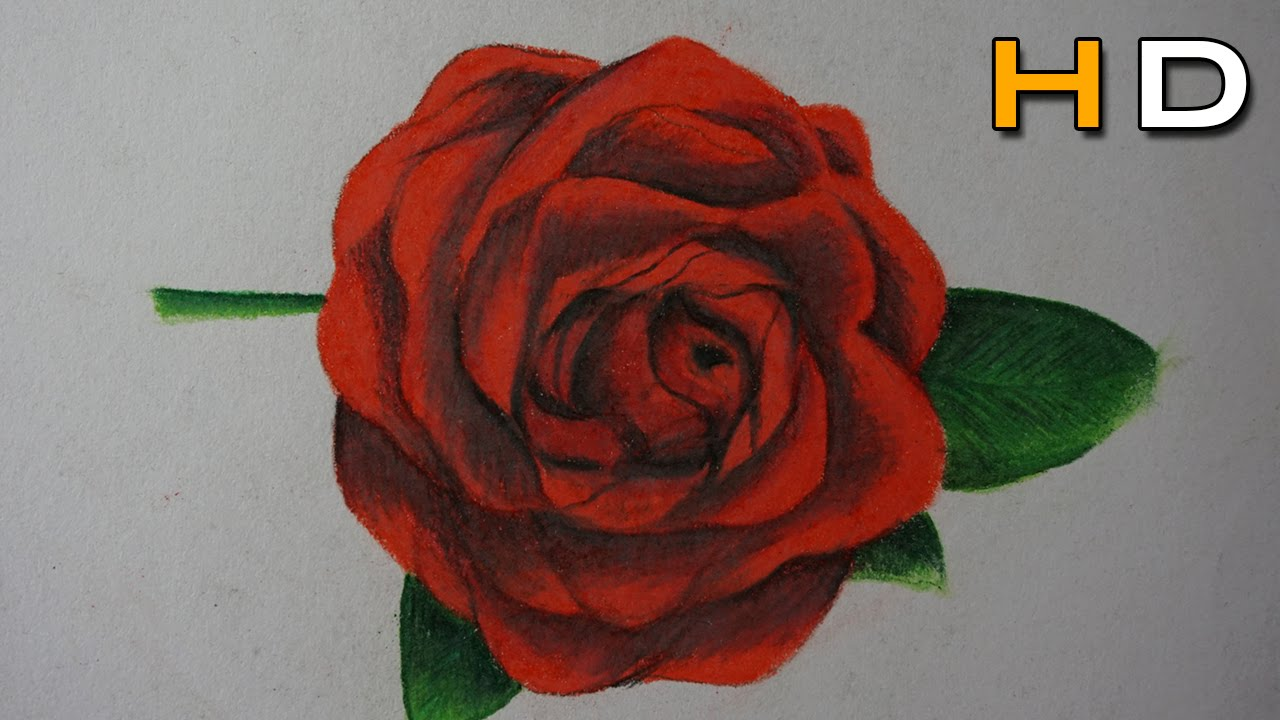 How To Draw A Rose With Colored Pencil Step By Step Timelapse