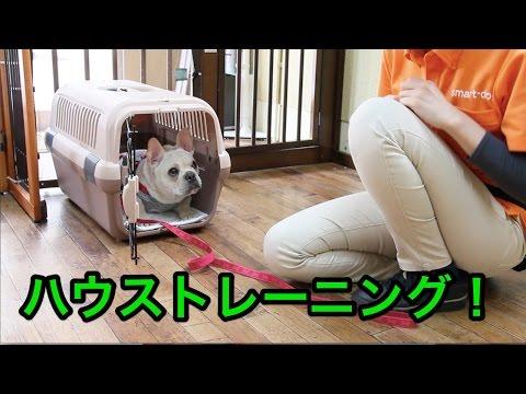 ハウストレーニング!〜犬のしつけは大阪のsmart-dog〜