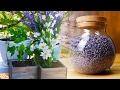 How To Grow Herbal Tea At Home