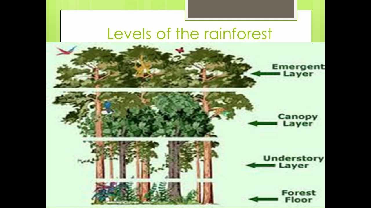 rainforest ppt