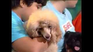 ძაღლები - Dogs - გადაცემა