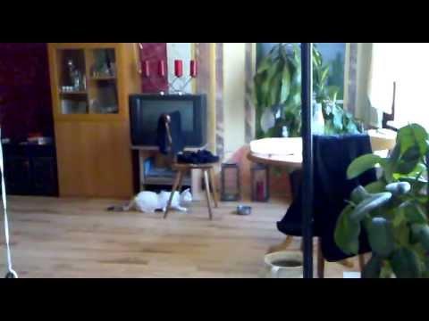 katze f ngt maus in der wohnung youtube. Black Bedroom Furniture Sets. Home Design Ideas