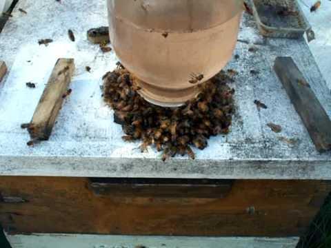 Beekeeping Honey Bees Open Feeding Vs Beehive Top Sugar ... - photo#36