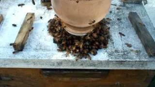 Beekeeping Honey Bees Open Feeding Vs Beehive Top Sugar Syrup Feed Bottles Beekeepers Honeybees Ga.