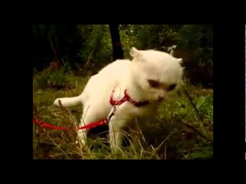 Чеширский кот и трава