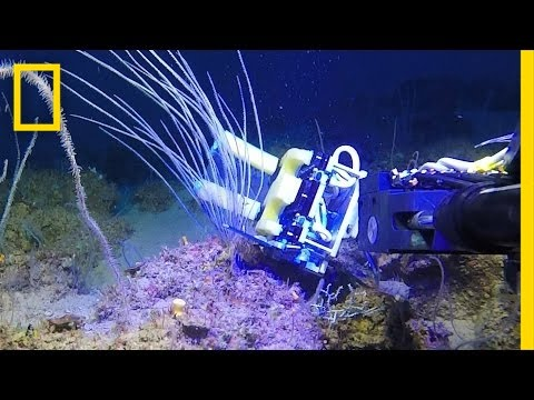 Squishy Robot Fingers: A Breakthrough for Underwater Science | National Geographic