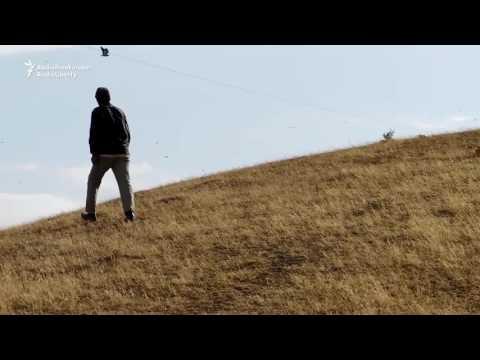 Locusts Destroy Large Area Of Crops In Southern Tajikistan
