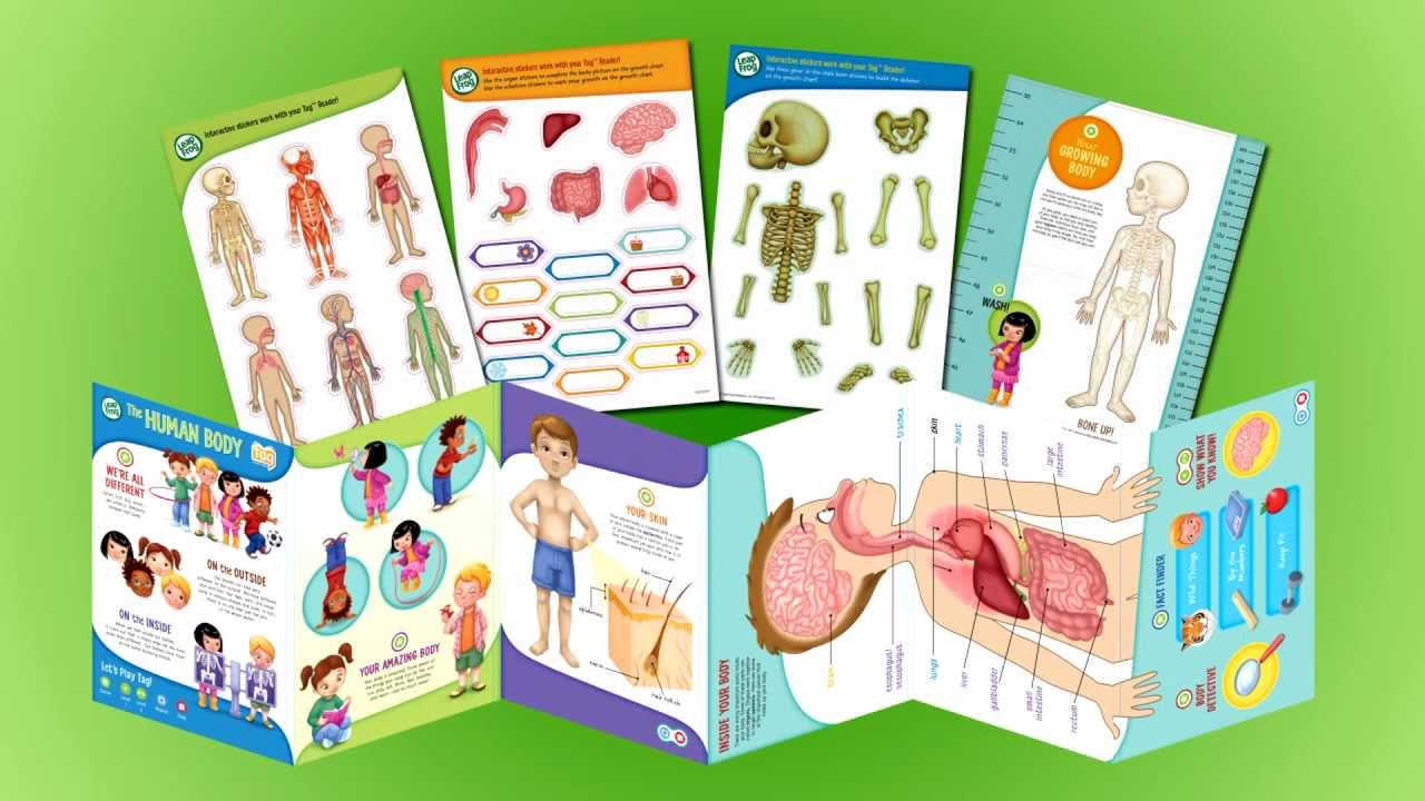 Leapfrog Tag Interactive Human Body Discovery Pack Youtube