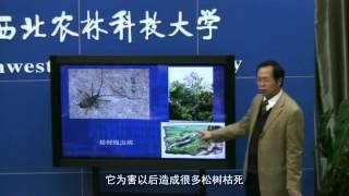 第9讲 鞘翅目昆虫分类(二)