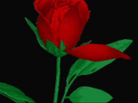 Sevgililer Günü - Valentine Day - Emirkan & Demet Akalın