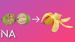 See How Different Fruit was Before We Domesticated Them