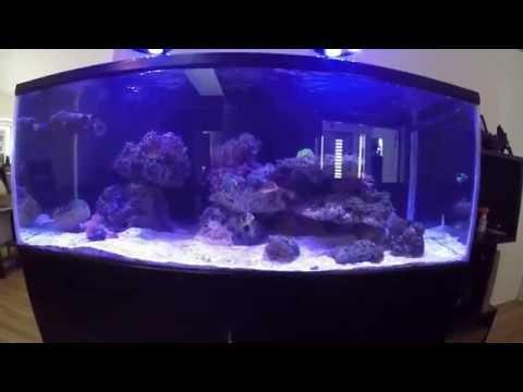 60 gallon saltwater aquarium setup youtube