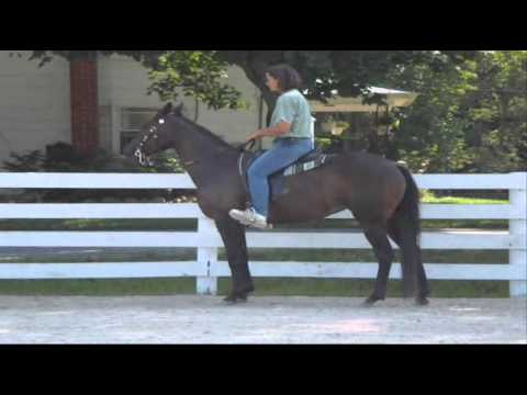 Style Racking Speed Racking Horse for Sale  SOUND! Flat Shod! Price Reduced $3900