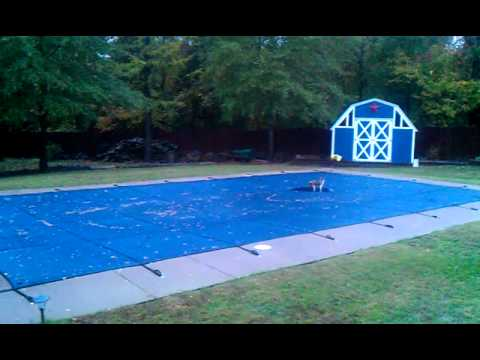 Stupid cat chasing water on pool cover.mp4