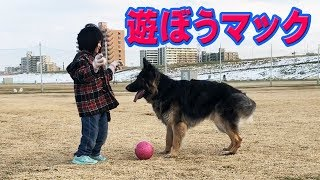 grandchild and German Shepherd dog 小学校から帰宅すると、用事済ませ...