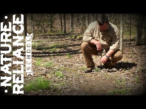 Tracking in Leaf Litter - Animal Tracking, Man Tracking