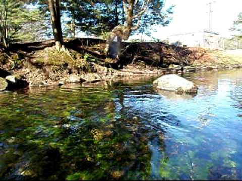 Swift river ma fly fishing youtube for Fly fishing massachusetts