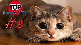 ПРИКОЛЫ 2019 ТОП СМЕШНЫХ ВИДЕО С КОТАМИ Смешные животные Смешные кошки TOP FUNNY PETS 8