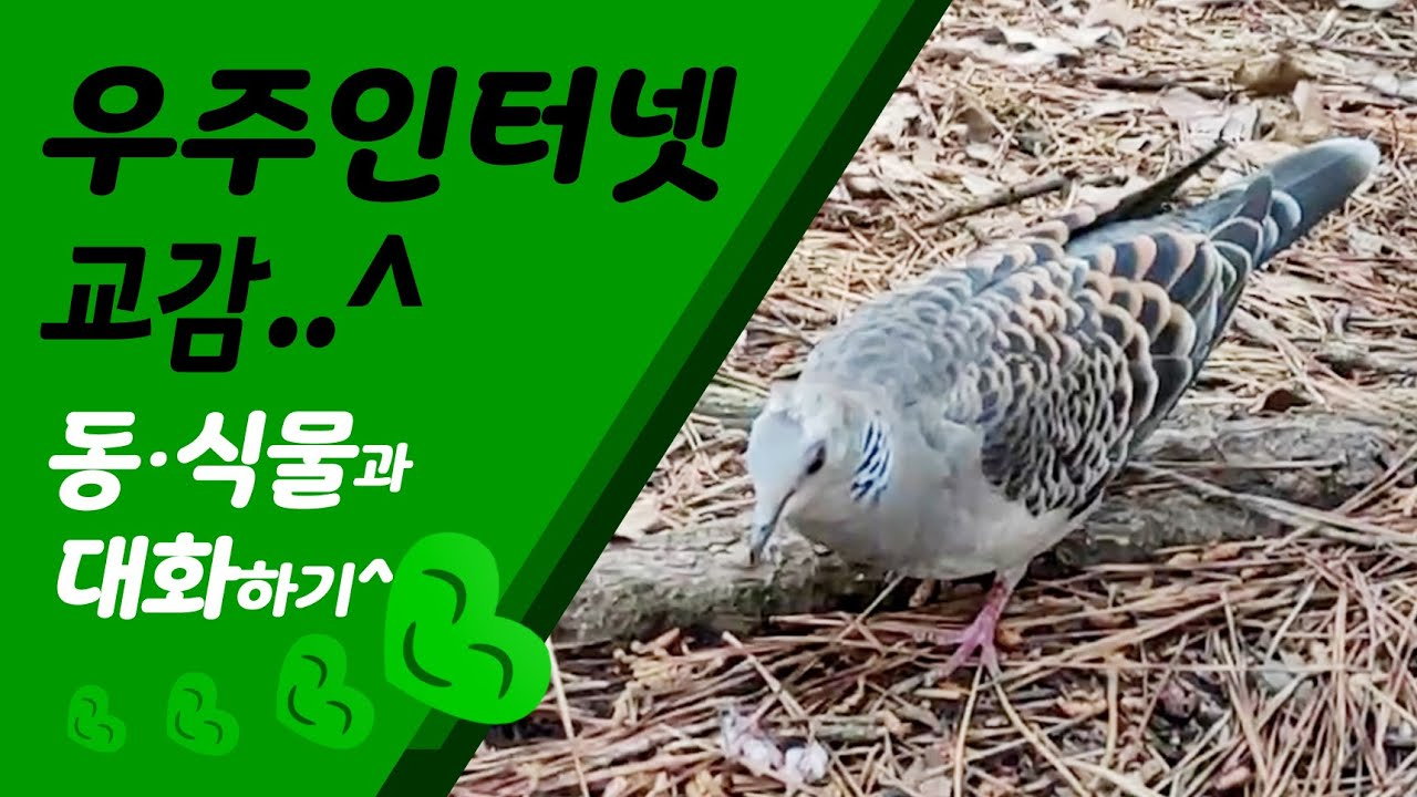 내꺼 우주인터넷 켜고 동물과 친구하기 ㅎㅎ Turn on my space internet and make friends with animals haha^