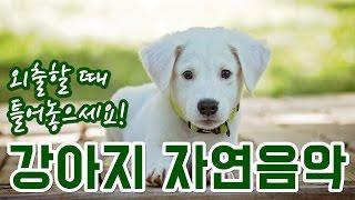강아지 수면/안정 음악, 외출할때 틀어놓으세요! 🐶 Relaxing Music for Dog, Petㅣ강아지가 좋아하는 음악