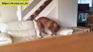 Одни дома подборка про собак