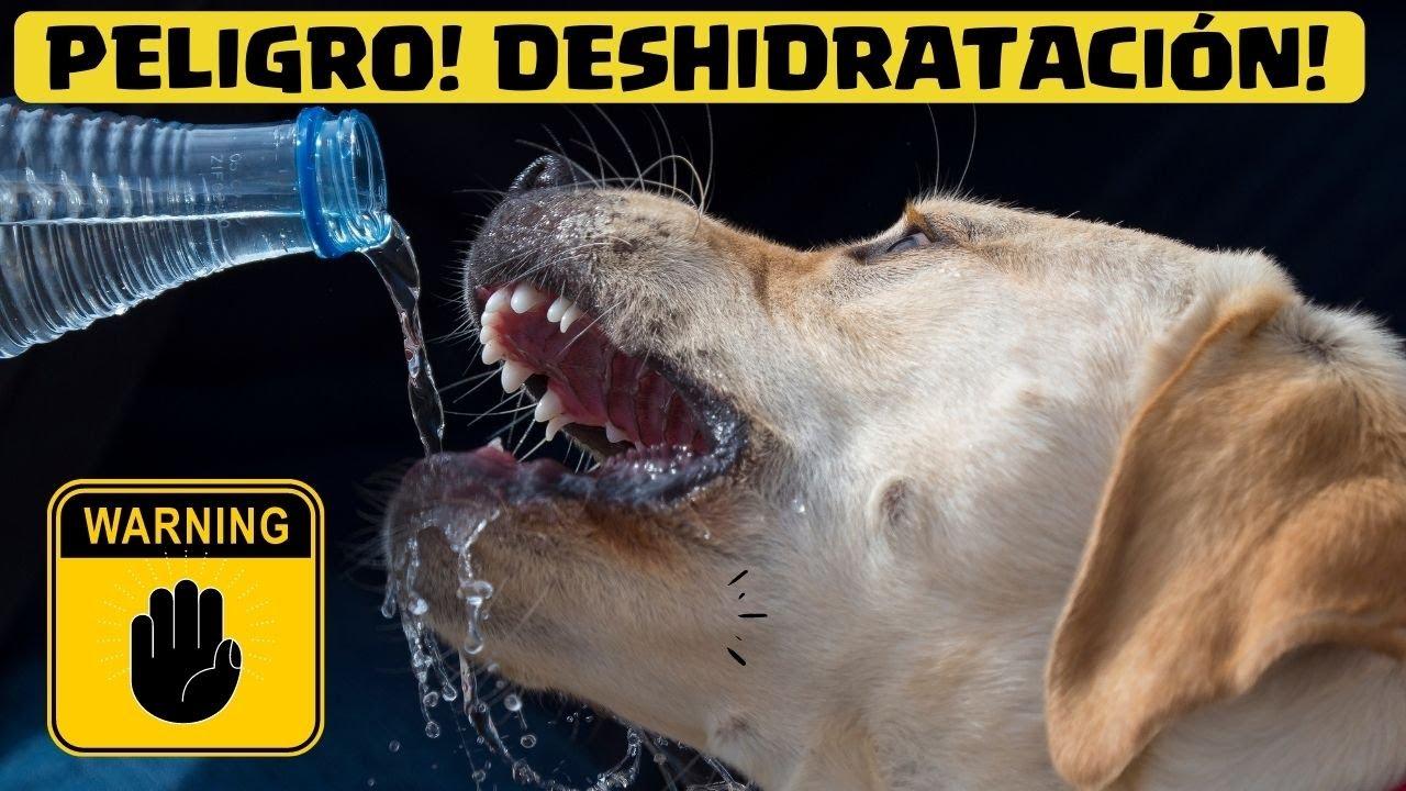Como saber si mi perro esta deshidratado 7 claves para for Como saber si un pozo esta legalizado