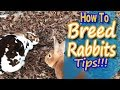 Breeding Rabbits: How to Guide and Tips