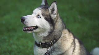 Как правильно воспитать собаку | Советы кинолога
