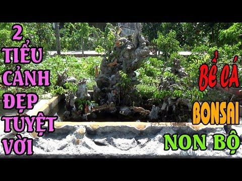 2 Tiểu cảnh non bộ bonsai bể cá tuyệt đẹp | Beautiful rockery