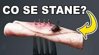 Co se stane s jídlem, když na něj sedne moucha?!