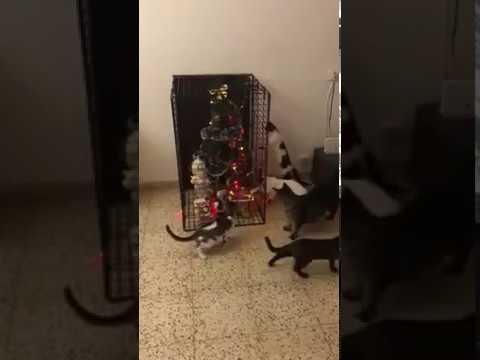 Вопрос: Почему почти все кошки так любят новогодние ёлки?