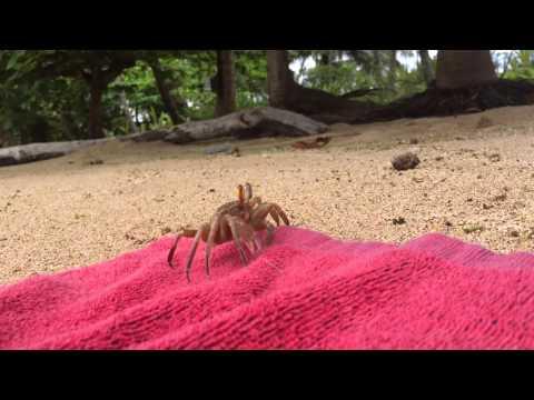 São Tomé Wildlife