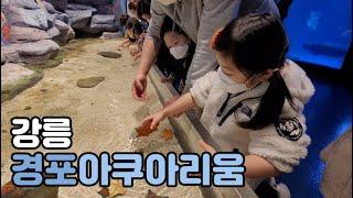 강릉 경포아쿠아리움 | 강릉 실내 아이랑 가볼만한 곳 …