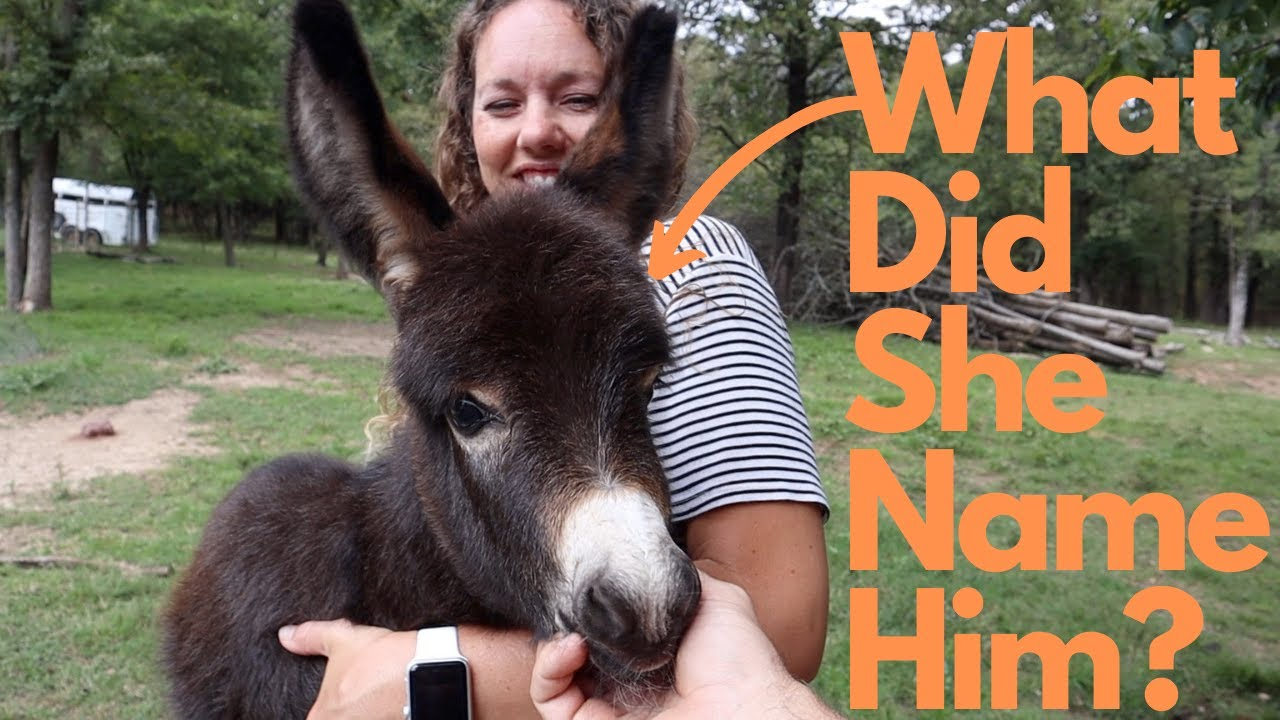 She Finally Named the Baby Donkey.... Well MAYBE!