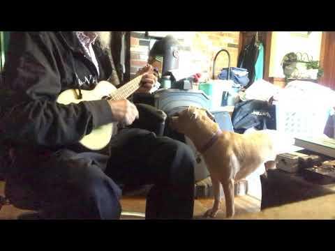 Dog Gone Gum Dang Dog Gone Dog Song • RIKU The Dog (Keebs & RIKU) ~Keebstunes - Ukulele Original