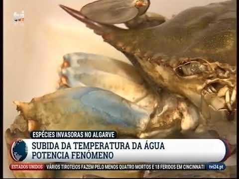 Reportagem na TVI sobre espécies invasoras
