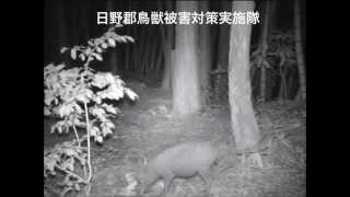 日野郡鳥獣被害対策実施隊(鳥取県) ブログ:http://blog.zige.jp/hino...
