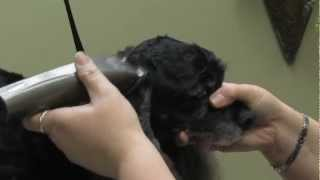 Arf To Art Grooming Solutions /am. Cocker Grooming
