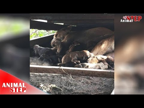 Homeless Dog Mother Gives Birth To 11 Puppies Under Dumped Car Ramp