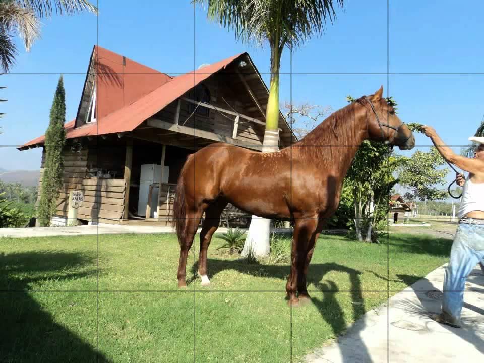 caballos espa ol y cuarto de milla youtube