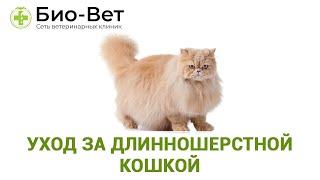 Уход за длинношерстной кошкой. Ветеринарная клиника Био-Вет