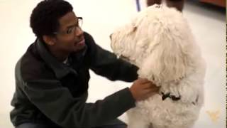 Differences Between Service Dogs