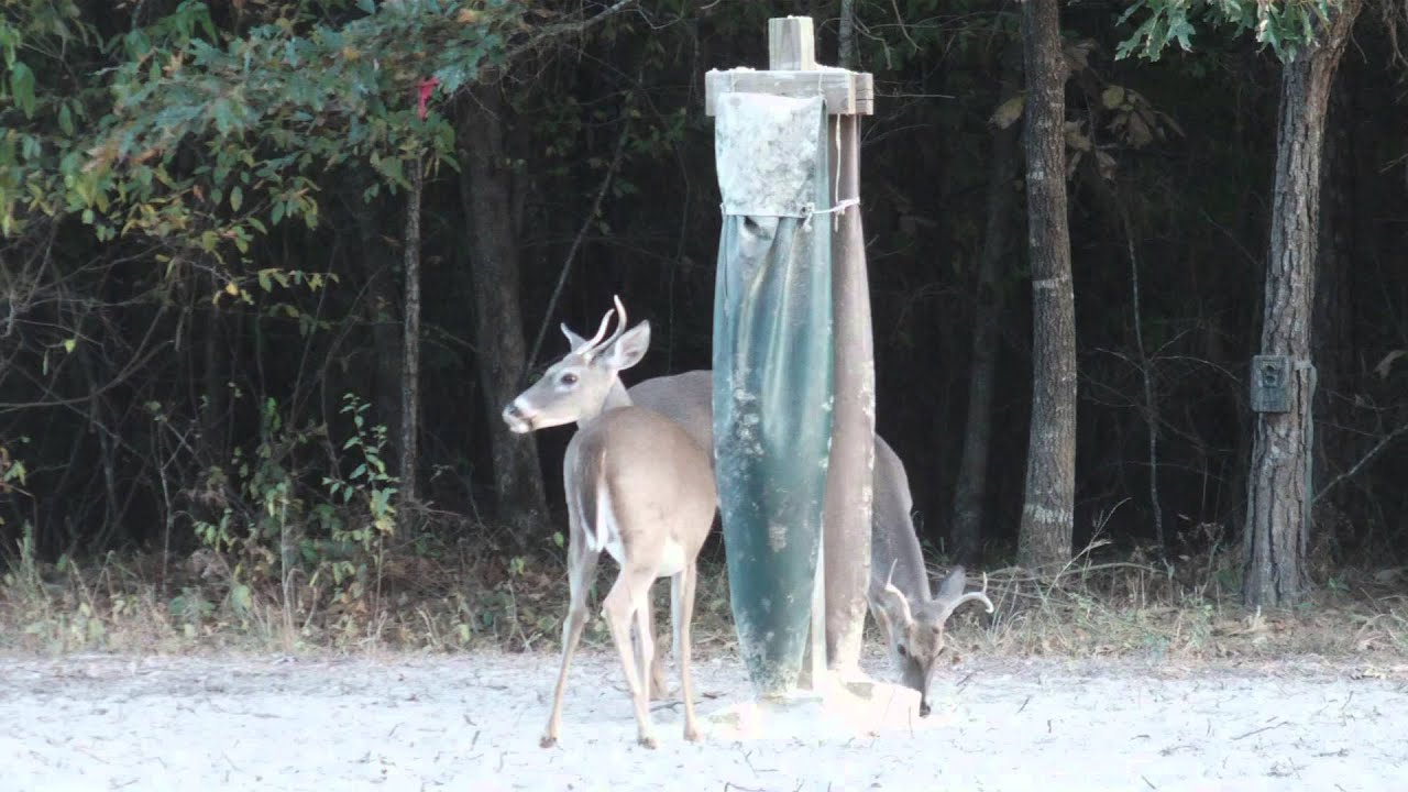 protein discussion feeder hogs your deer at try florida feeders homemade scaring away this