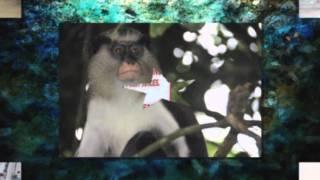 Segling i Västindien 2011 - del I