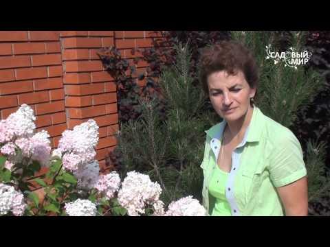 Виды и сорта гортензий. Сайт 'Садовый мир'